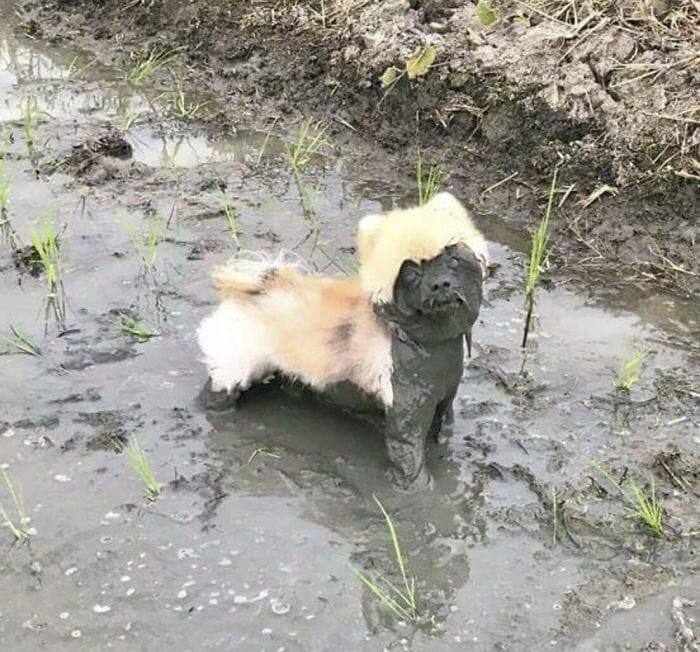 грязный песик